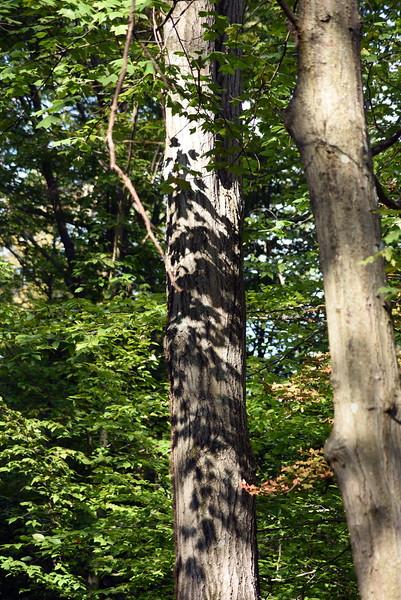tree 091915_7510