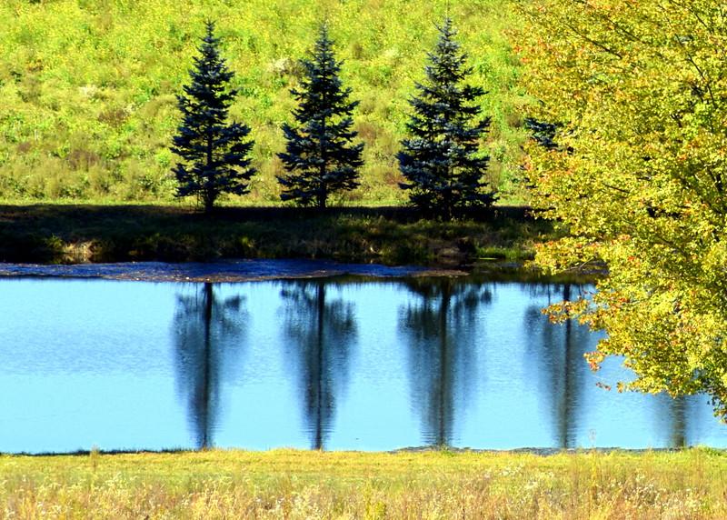 tree reflection 101015 _8661