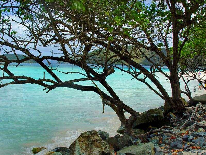 tree st johns 040306 03074
