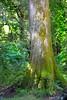 ire tree 080315 5471e