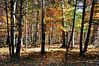 trees 102315_0093
