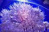 Tree SC INF 0021 2