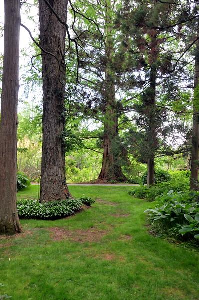 trees 051715_0619