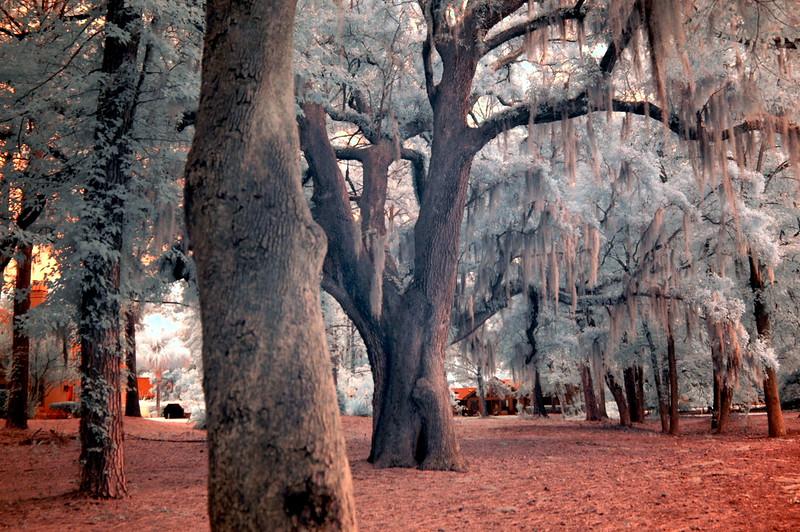 trees Infrd 80314-032