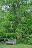 tree 051715_0601