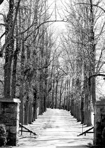 tree row 042515_1001 bw