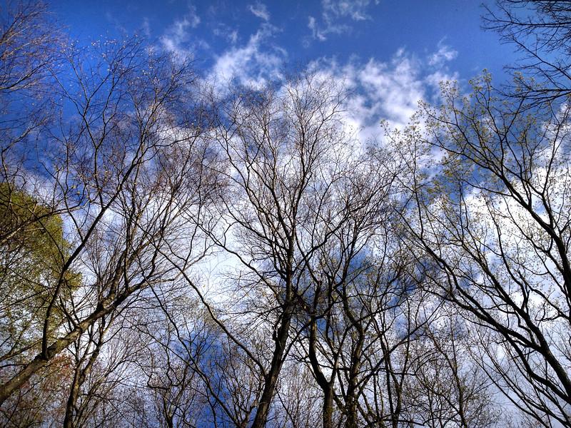 tree sky 50515_0327