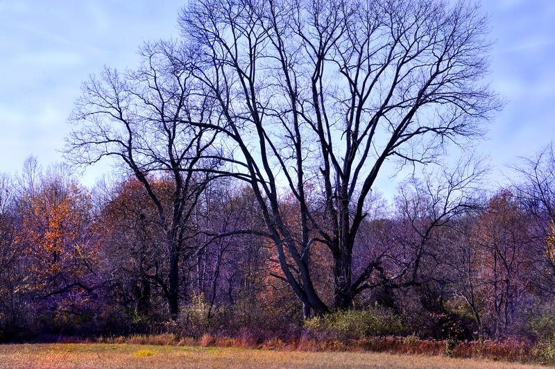 tree 111014_0704 2