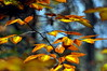 leaves 102014_0854