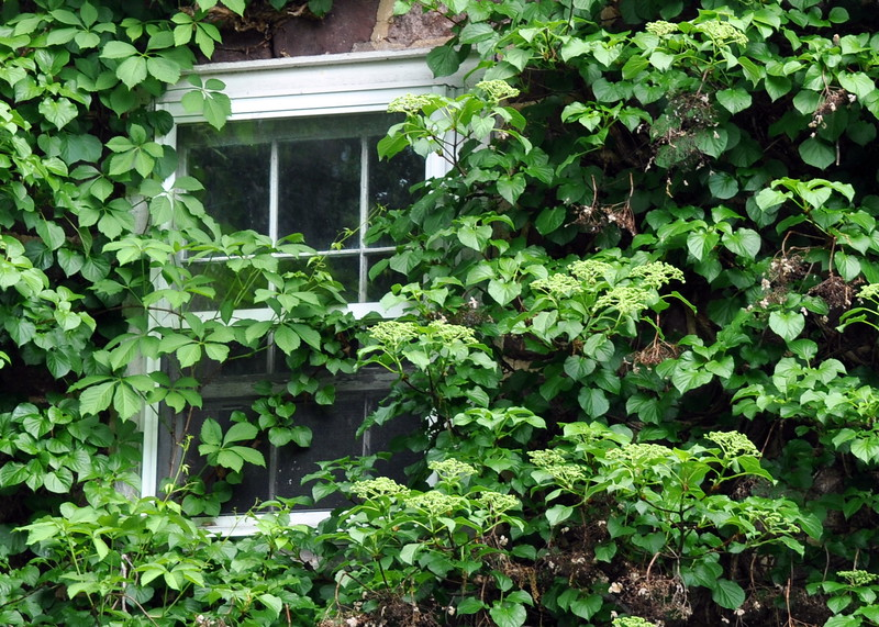 window 051715_0592
