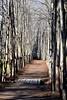 trees 122714_0003
