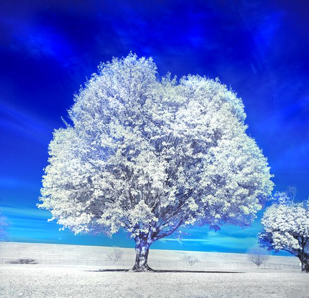 tree mirror Infrd 101017_0016 3 sqare