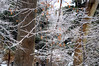 crystal tree 20514_0525 2