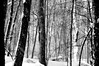 trees snow 21314_0031 bw