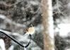 snow bird 012615_0331