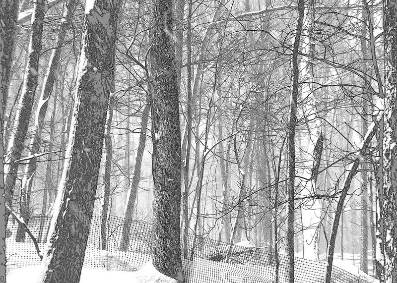 trees snow 21314_0031 bw pen