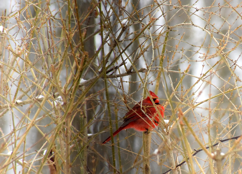 snow red 012615_0414 2