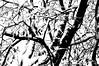 snow tree 102911 58 bw