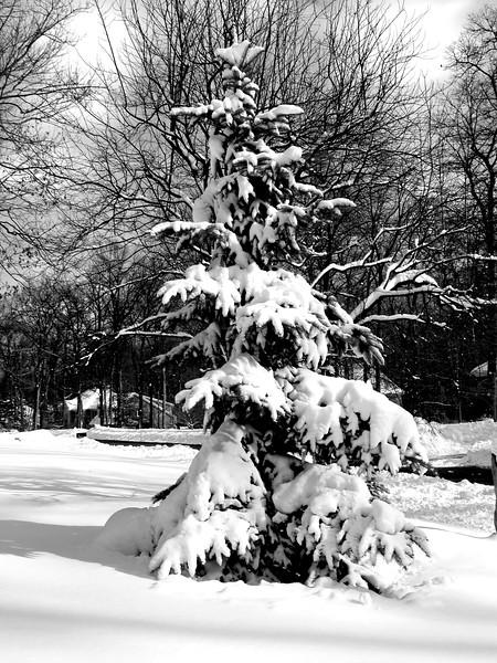 snow 12711 MCH 6261 2