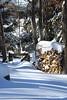 wood pile 012416_0164