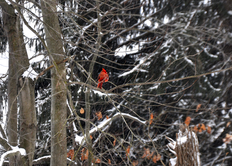 red 12014_0465 2