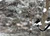 snow bird 012615_0350