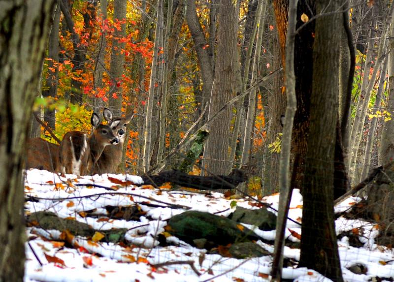 Deer 110111_0069 2
