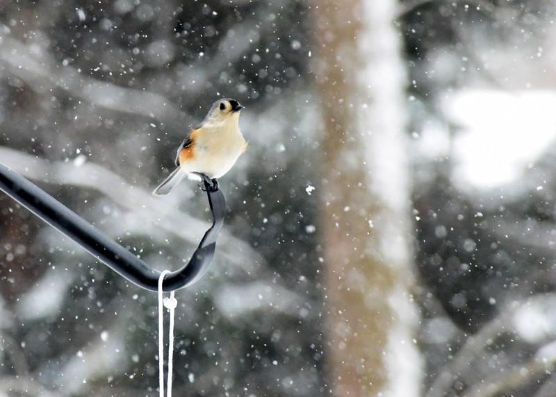 snow bird 012615_0329