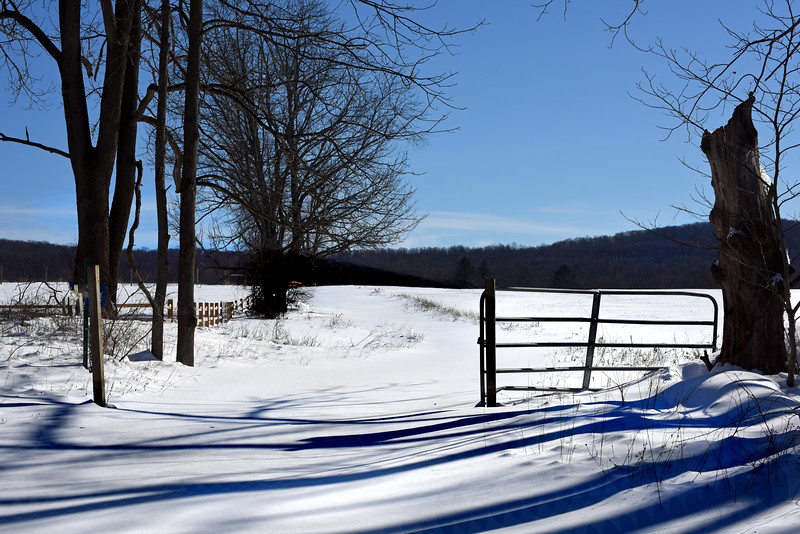 winter field 012416_0172