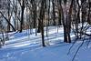 snow trees 012416_0094