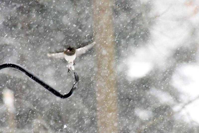 snow sorm bird 22115_0708 2