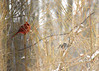 snow red 012615_0413