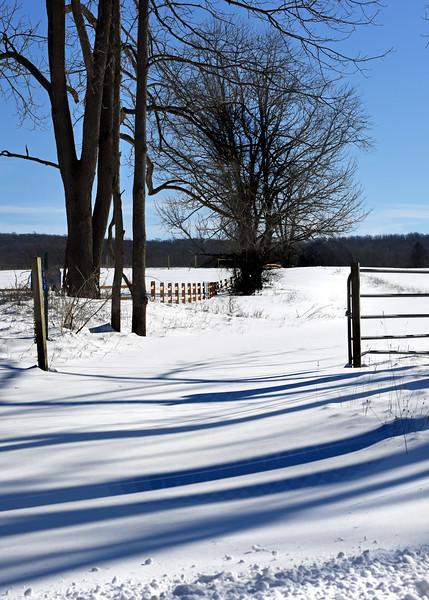winter field 012416_0170