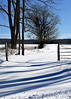 winter field 012416_0170
