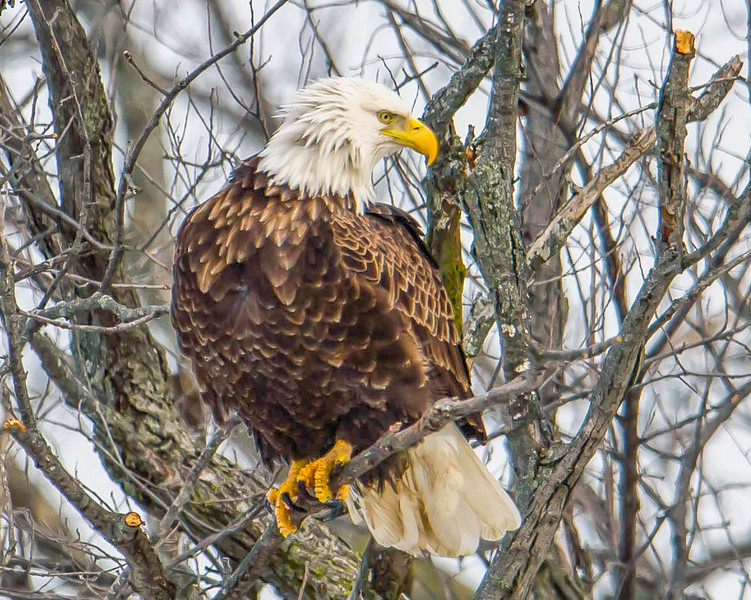 Striking a pose.  This image captured off the Mississippi river near LeClaire, Iowa