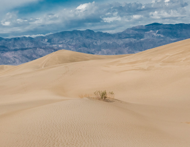 Cover - Mesquite Sand Dunes, Death Valley National Park