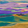 """Rolling hills, as shot from the top of the Steptoe Butte, from the scenic area known as """"The Palouse, south of Spokane, Washington."""
