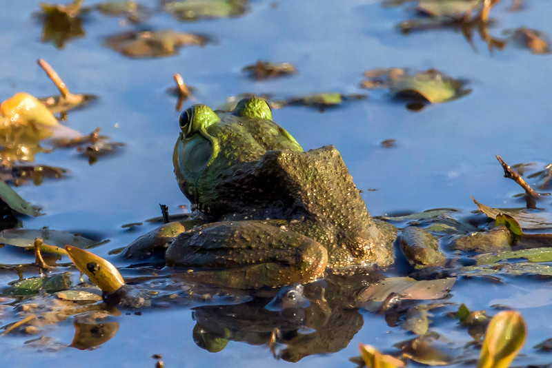 Frogs everywhere you look