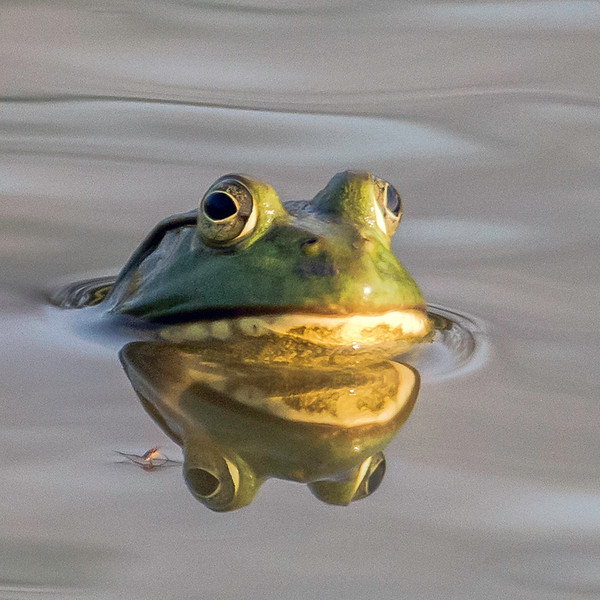 Mr Bullfrog<br /> A slightly different processing approach