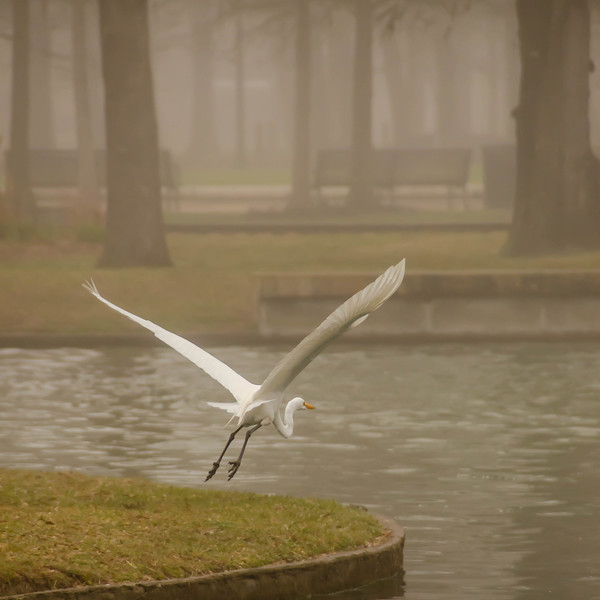 We have liftoff on a foggy morning in a park near Houston, Texas