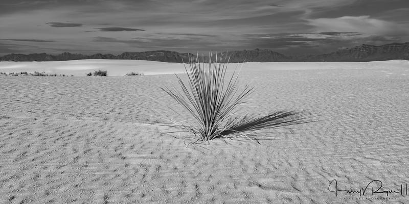 Morning Serenity at White Sands