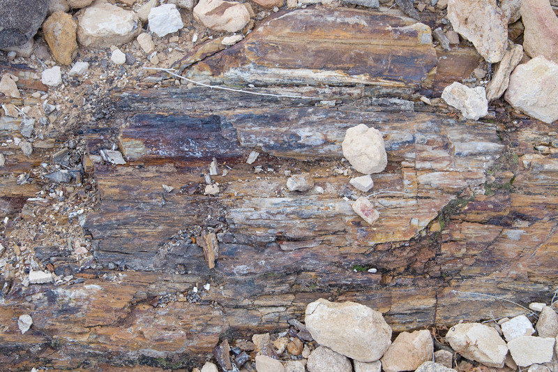 Petrified Log from the Age of Reptiles, dating back approx. 150 million years ago; at the Valley of Fire State Park, Nevada.