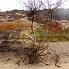 Driftwood - Northern California Coast 84