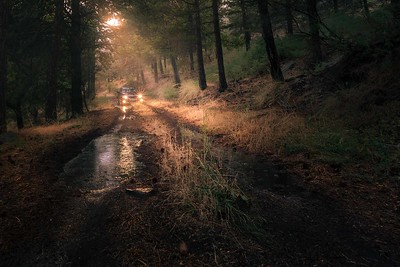Car driving into a forest after heavy rain
