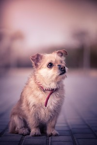 Portrait of mongrel dog in a park