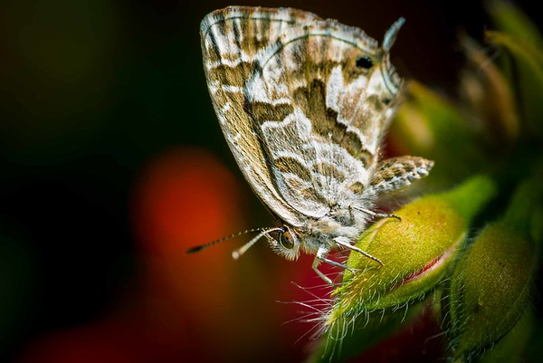 Butterfly on flower closed