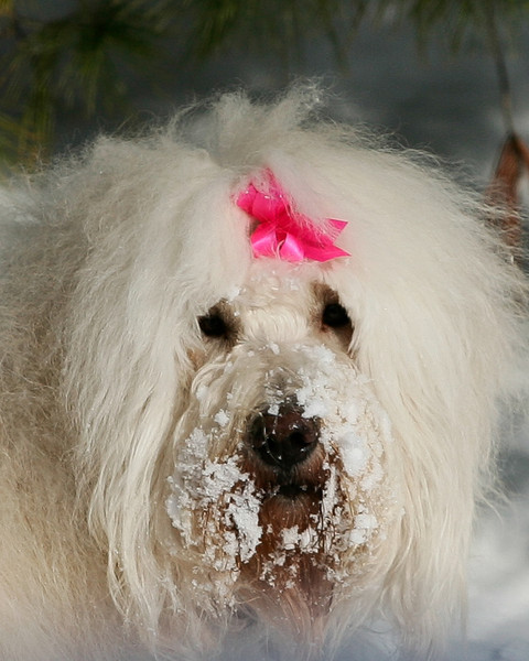 My snow lovin dog Daisy