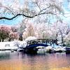 Monet Bridge in Infrared