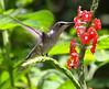 Nectar Craze