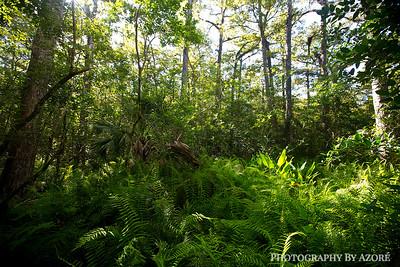Corkscrew Santuary State Park...